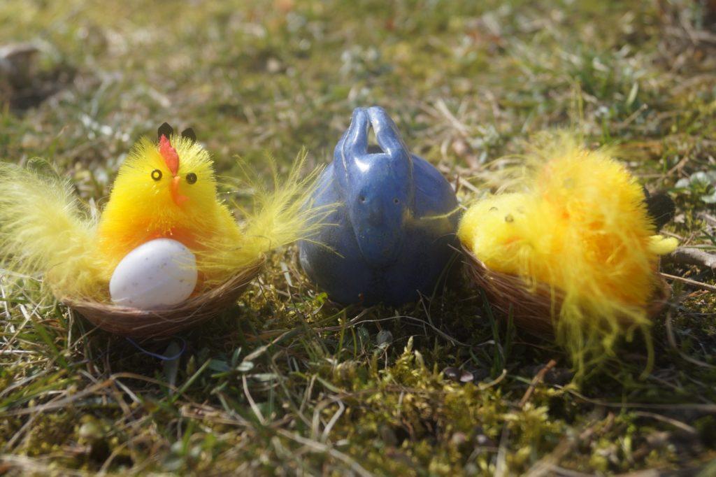 zajączek i kurczaczki