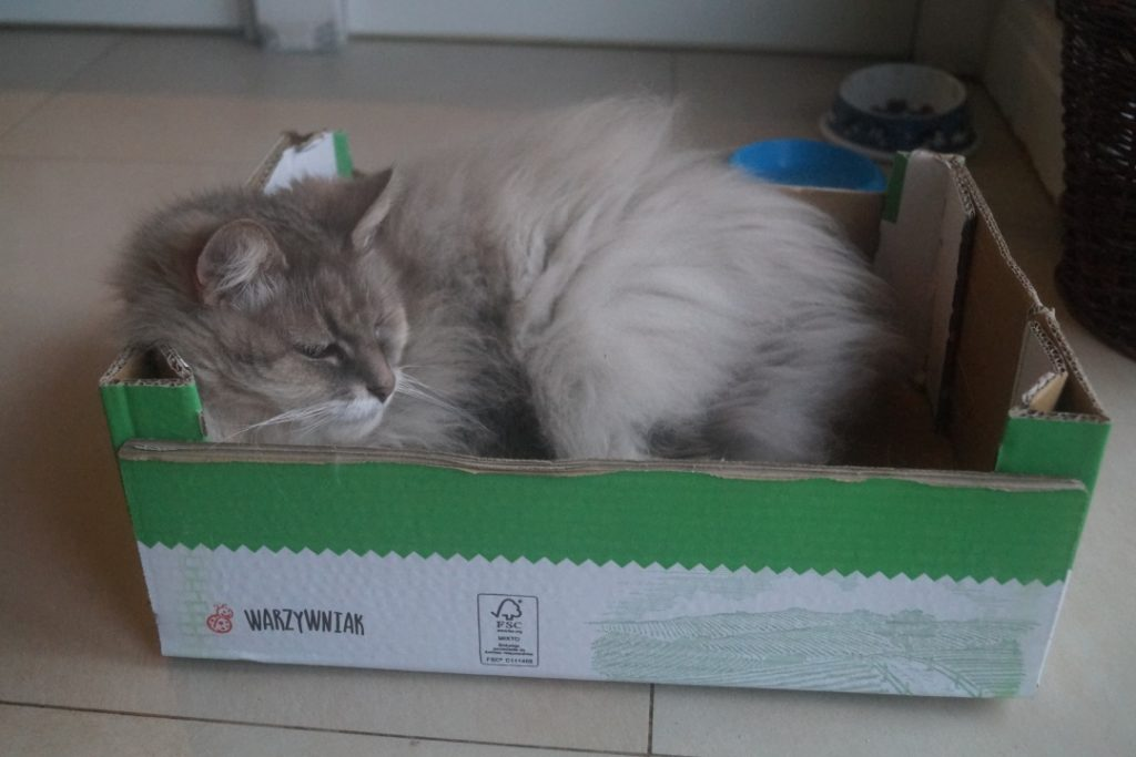 Kot w pudełku