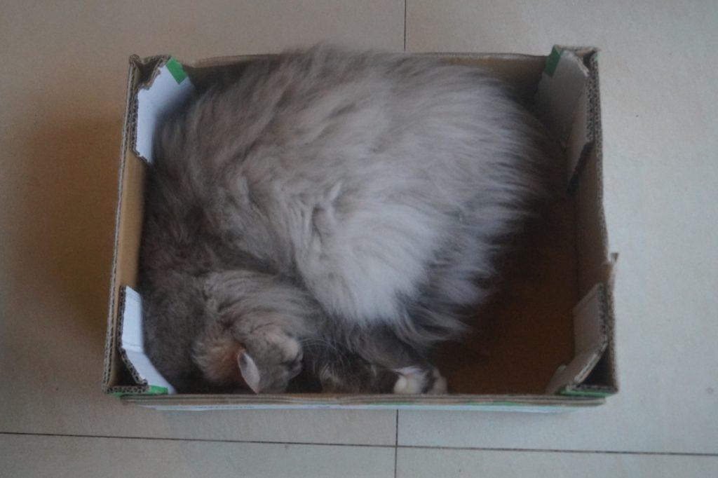 Kot śpiący w pudełku