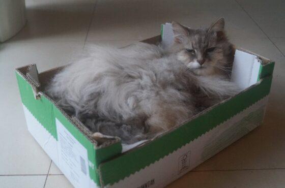 Legenda o pierwszym kocie z pudełka